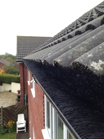 Bird Proofing With Gutter Brush