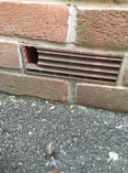 mouse damage to brick air vent