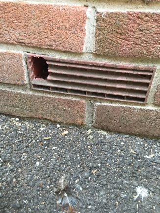 damage to air brick/vent by rodents