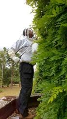 Wasp Nest Treatment