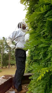 treating a wasp nest in wisteria