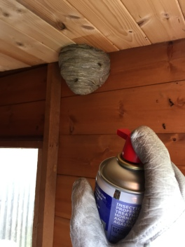 treating a wasp nest with a quick knockdown