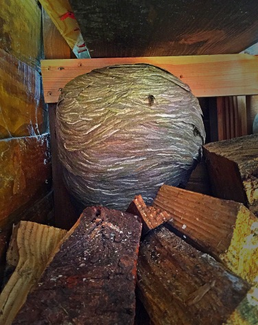wasp nest built in a log store