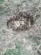 Wasp Nest in ground