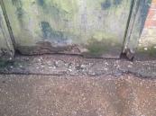 rodent damage to door