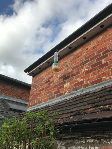 wasp trap hanging from gutter