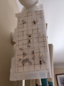 moths stuck within a moth trap