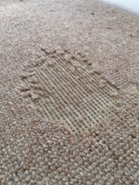 Carpet Moth damage